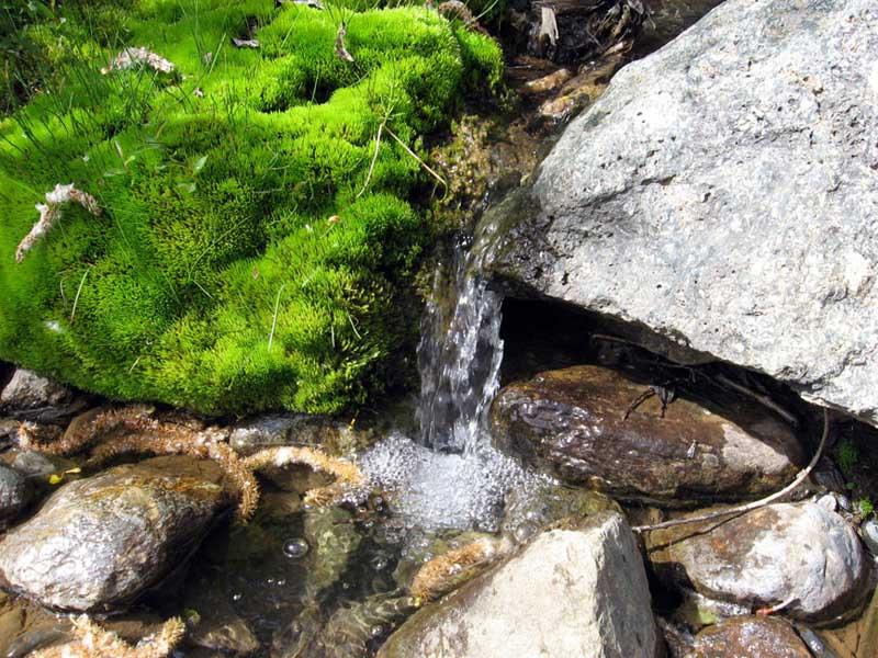 Анализ на качество воды в родниках (источниках)