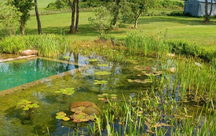Анализ воды пруда, анализ донных отложений и воды