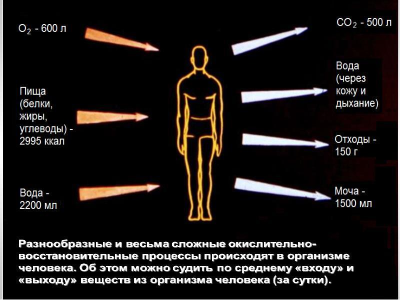 Окислительно-восстановительные процессы в организме человека